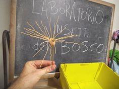 laboratorio insetti del bosco