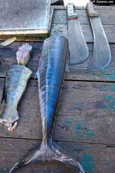 A Sainte-Luce au retour de la pêche, les pêcheurs vendent leurs prises directement sur de petits étals posés sur la plage du bourg.
