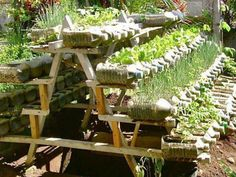 Recycled container vegetable garden. In this amazing home made rack system.