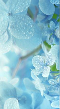 Flower Iphone Wallpaper, Flower Background Wallpaper, Scenery Wallpaper, Cute Wallpaper Backgrounds, Flower Backgrounds, Aesthetic Iphone Wallpaper, Beautiful Flowers Wallpapers, Beautiful Nature Wallpaper, Pretty Wallpapers