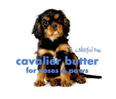 I love this label, maybe because Gio is a black and tan English Toy Spaniel. Cavalier King Charles Spaniel Dog Nose Butter 2 by TheBlissfulDog, $11.50
