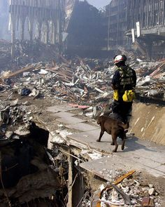 Hero Dogs of 9/11, September 11, 2001, rubbles, rescue worker, hero, history, never forget.