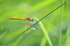 a magical dragonfly