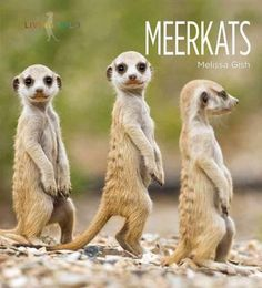 A look at meerkats, including their habitats, physical characteristics such as their tails, behaviors, relationships with humans, and their stable status in the world today.