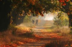 automne Pologne