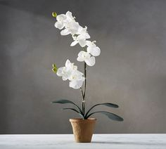 How to Grow Orchids Outside. If you want to grow orchids outside, there are some fairly simple steps you'll need to take. You'll have to find out which orchids will grow in your region and climate. Best Indoor Plants, Exotic Plants, Exotic Flowers, Faux Flowers, Silk Flowers, Beautiful Flowers, White Plants, Faux Plants, Plantes Feng Shui