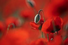 One in a milion Photo by Daniel Danilov — National Geographic Your Shot