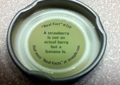 "Snapple Cap ""Real Fact"" #719"