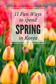 Amazing places to see during the spring in Korea!