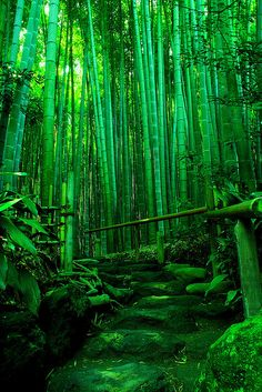 I'll never forget the sound of this bamboo forest as it rattled in the wind.