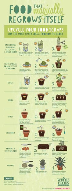 Growing vegetables from food waste is a great lesson for kids and also makes great science experiments!!