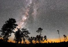 The International Dark-Sky Association designated Stephen C. Foster State Park in the Okefenokee Swamp as Georgia's first Gold-tier International Dark Sky Park.