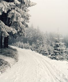 The softened calm of a snowy path