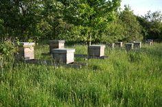 Bijenwerk september/oktober - Op peil brengen wintervoorraad berekening