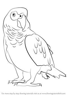 Learn How to Draw an African Grey Parrot (Birds) Step by Step : Drawing Tutorials