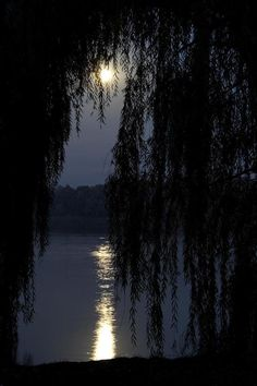 Amazing weeping willow tree shot... Breathtaking & beautiful! Ahhhh... Would love to be curled up on a porch swing while reading a book by moonlight & seeing this view right about now! Gentle breeze... Warm air... Uggggh, I just want to jump inside of this photo! :/