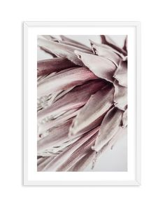 Abstract Protea No II Framed Prints Online, Buy Prints Online, Buy Art Online, Quote Prints, Wall Art Prints, Fine Art Prints, Modern Frames, Australian Art, Wall Art Designs
