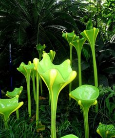 Chihuly Glass as a garden! Dale Chihuly, Art Of Glass, Glass Artwork, Missouri Botanical Garden, Botanical Gardens, Glass Garden, Garden Art, Fused Glass, Stained Glass