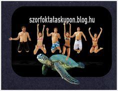 szorf_oktatas_balatonfuzfo.jpg