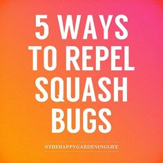 You can totally control and prevent squash bugs effectively by following these awesome tips at https://www.instagram.com/p/BKuIt3FAkIa