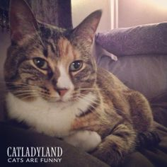 Catladyland: Cats are Funny: Back-of-the-Sofa Hair-Sniffer