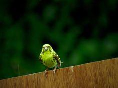 Bird in the rain