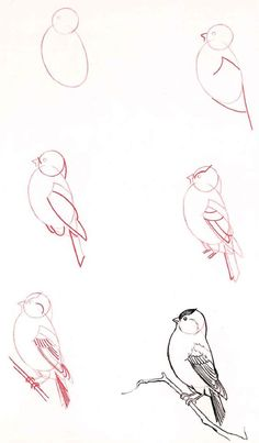 How to Draw Birds..