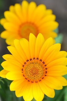 Bright and Cheerful flower!