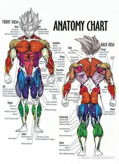 """""""Exercise Muscle Guide - Anatomy Chart - Super SS"""" Canvas Prints by gohanflex Muscle Chart Anatomy, Body Anatomy, Anatomy Drawing, Human Muscle Anatomy, Human Anatomy, Fitness Workouts, Ab Workouts, Fitness Diet, Muscle Diagram"""