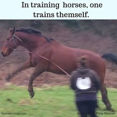 https://www.facebook.com/Ponderosa-Equine-Animal-Rescue-PEAR-355832724491086/