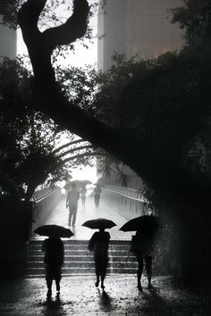 Christophe Jacrot. Hong Kong In The Rain. Les trois.