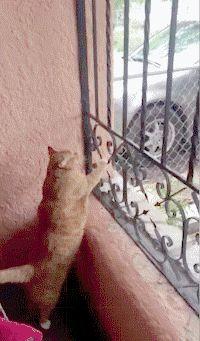 Fat Cat Comin Thru