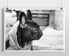 Training Your Dog With A Few Key Tips. Dogs are a special animal that bring a lot of joy into lives. However, training your puppy can require a lot of hard work. Animals And Pets, Cute Animals, Converse, Dog Wallpaper, Dog Care Tips, Pet Tips, Dog Hoodie, Dog Sweaters, Training Your Dog