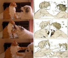 Anime version of dog and cat pics<<< cough cough spamano cough cough cough Cartoon As Anime, Funny Anime Pics, Manga Anime, Anime Art, Cartoon Fun, Anime Love, Spamano, Anime Version, Anime Kunst