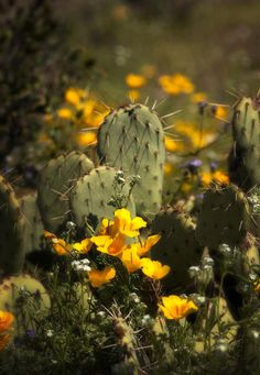 Spring Has Sprung In The Desert  Photograph  - Spring Has Sprung In The Desert  Fine Art Print