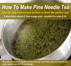 How To Brew The Perfect Cup Of Pine Needle Tea (& Which Trees To Never Use!)