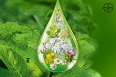 ¿Imaginas concentrar en unas pocas gotas la acción terapéutica de las plantas? Son muchas las plantas que tienen propiedades digestivas; descúbrelas aquí.