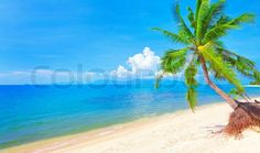 Stock image of 'Beach and coconut palm tree'