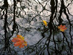 -217- autumnal finalists - Schleswig