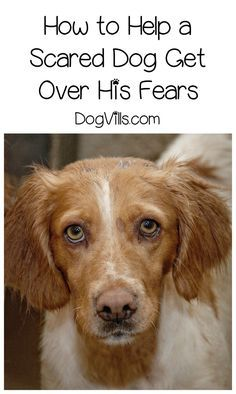 How do you ease dog fears, especially when they seem so illogical? Check out our dog training tips to help Fido stop being such a scaredy cat!
