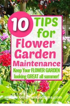 Garden Maintenance doesn't have to be difficult. Tips for Flower Garden Maintenance covers how to water your flower garden, tips for keeping weeds down, how to keep your flower garden looking great all summer. Garden Tips, Garden Art, Garden Maintenance, Garden Pests, Flowers Perennials, Vegetable Garden, Weed, Plants, Summer