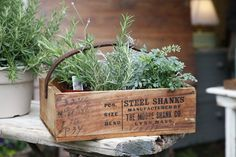 these are a few of my favorite things: wood, metal and growing greens. Vintage feel.