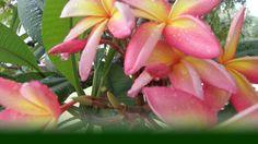 Body-Thailändische Behandlungen|LIFETOWER Body, Plants, People, Flora, Plant, Planting