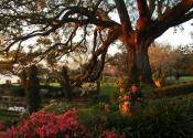 Cummer Gardens in Jacksonville, FL
