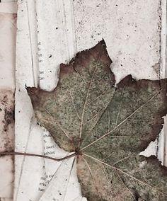 Fall fades