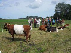 Meindert Nieuweboer geeft uitleg over de koeienrassen.