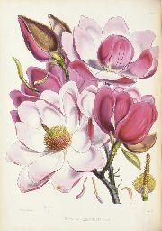 "Hooker - ""Illustrations of Himalayan Plants"" 1855"