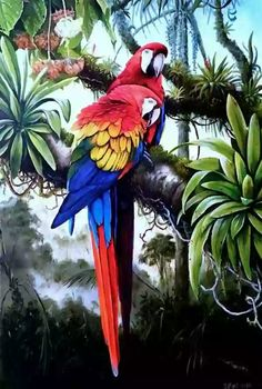 Ideas For Colorful Bird Painting Draw Tropical Birds, Tropical Art, Exotic Birds, Colorful Birds, Jungle Art, Bird Illustration, Bird Drawings, Bird Pictures, Wildlife Art