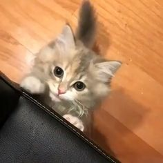 Funny Cats and Kittens Jump Meowing Cute Cats And Kittens, I Love Cats, Crazy Cats, Cool Cats, Kittens Cutest, Kitty Cats, Cute Funny Animals, Cute Baby Animals, Funny Cats