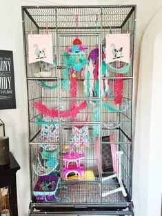 Our girls' Sugar Glider Cage. ❤️❤️❤️